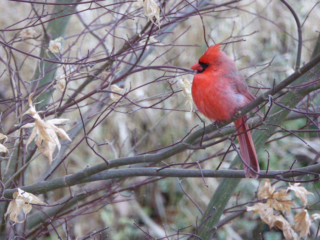 Birds - 2nd Place