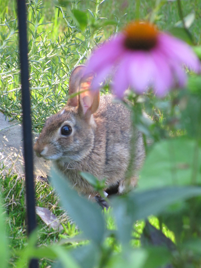 Wildlife - Wolary, Becky