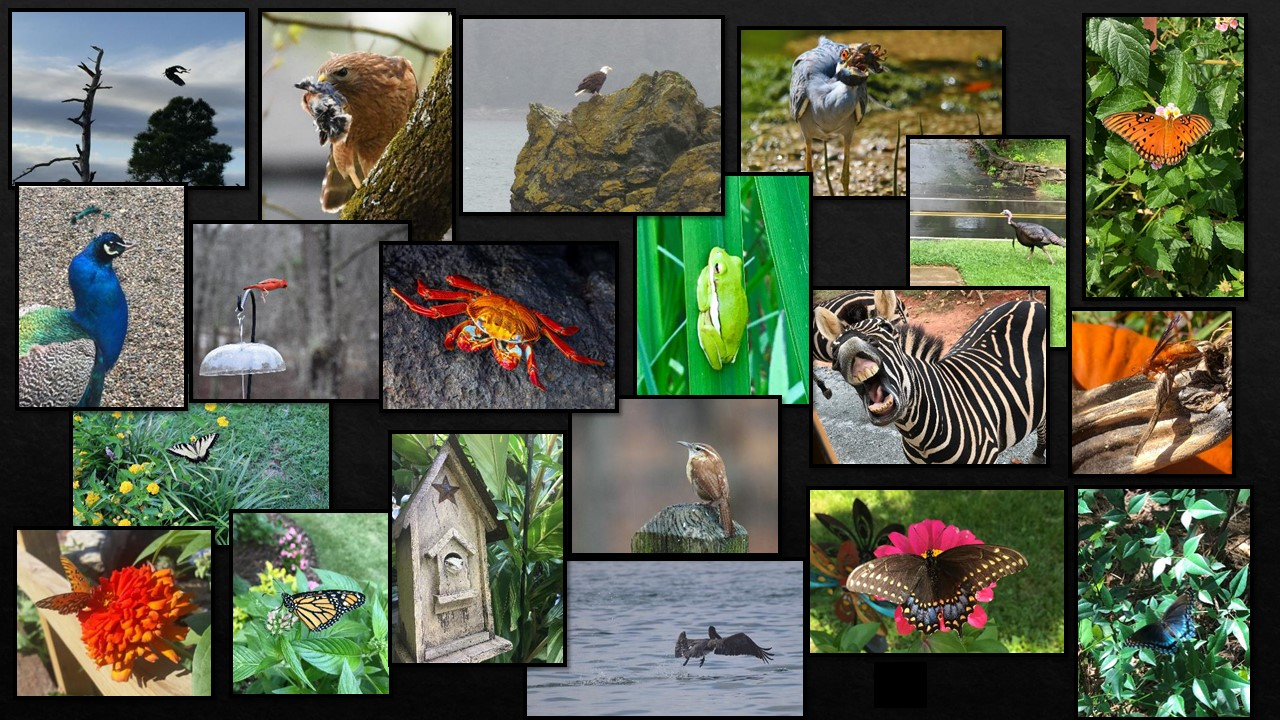Birds and Wildlife Category