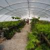 Ferns, Ferns, & More!