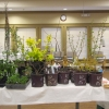 Dirr Plants 1