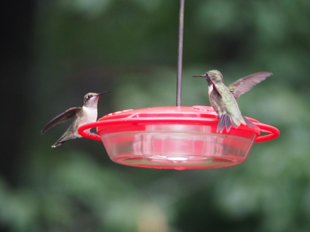 birds_panetta_b_2