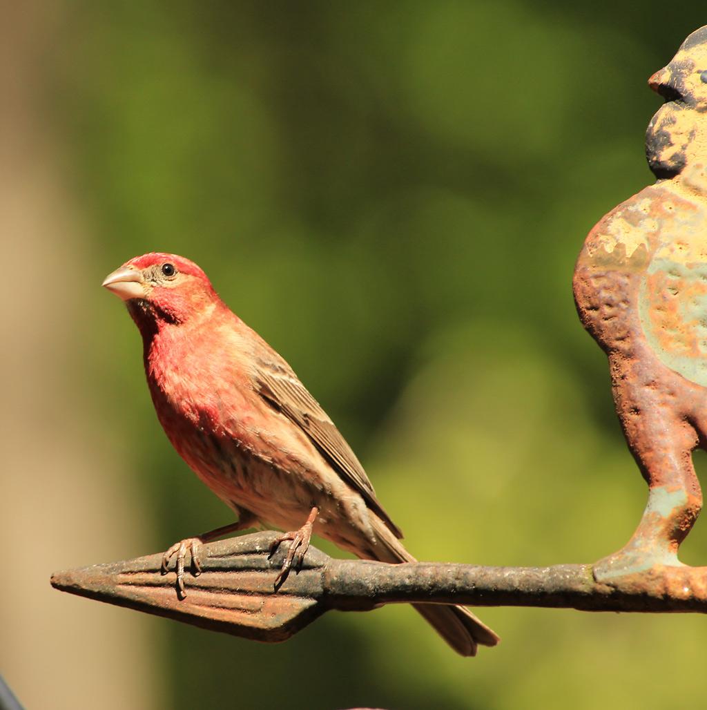 birds_weinkle_c_1-jpg