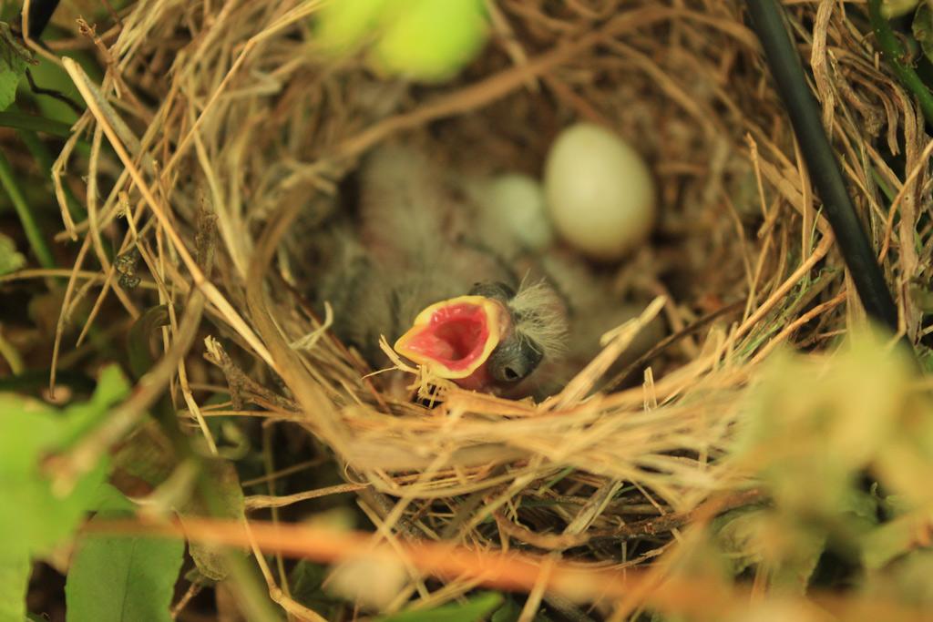 birds_weinkle_c_2-jpg