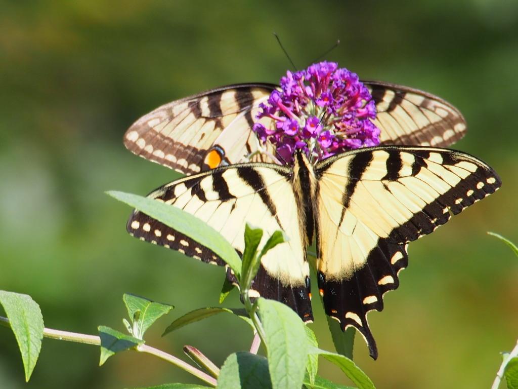 wildlife_panetta_b_1