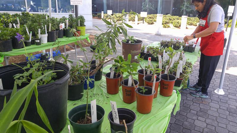 plant-sale-2016-12