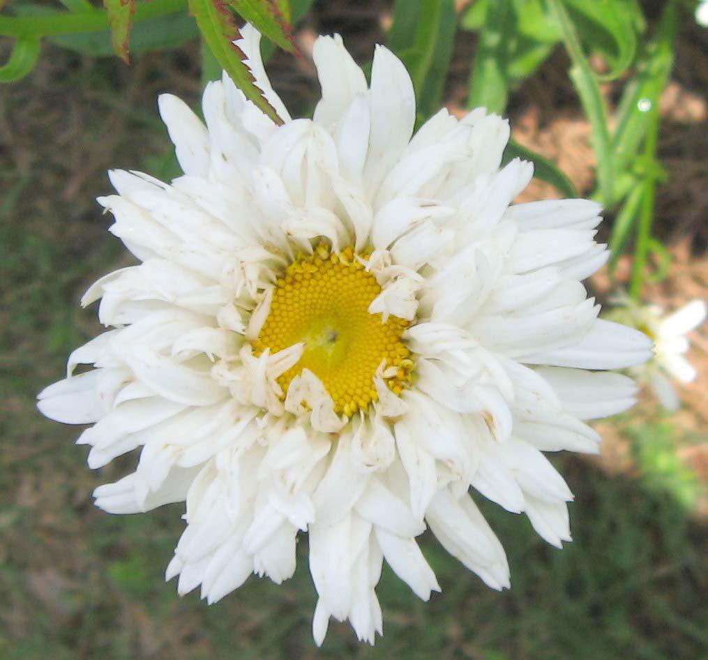 Perennials For Beginning Gardeners In Georgia