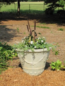 Entrance urn with ornamental millet, white pentas and blue daze