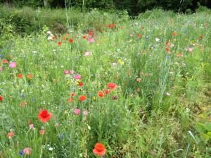 2015 GT - Trailway meadow