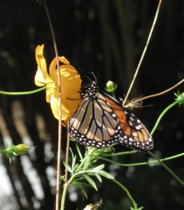 2015 GT - KM Butterfly