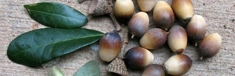 Slider-acorns